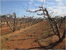 Árboles podados y madera triturada