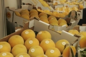 La Universidad de Zaragoza investigará cómo producir fruta de hueso de mejor calidad