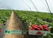 Fresón de Palos, comprometida con la agricultura responsable