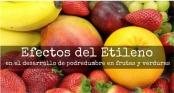 Efecto del etileno en el desarrollo de la podredumbre de las frutas y verduras