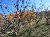 Segunda toma de muestras de suelo en Finca Valleluz